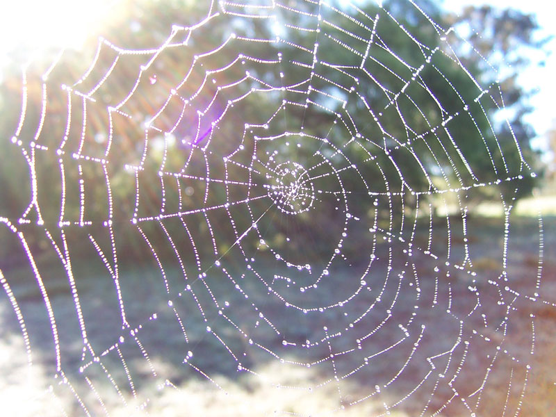 4 spider_web